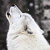 lonelychicken123's avatar
