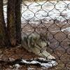 loneman-wolf's avatar