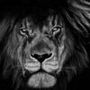 LoneWolf91's avatar