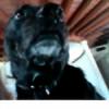 longipenus's avatar