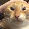 lookbrooke's avatar