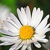 loozak84's avatar