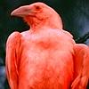 lordcorvusloki's avatar