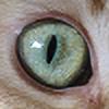 LordVishiscat's avatar