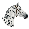 Lost-Creek-Stables's avatar