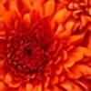 Lotusflower20's avatar