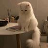 LouisSo's avatar