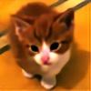 love-cats's avatar