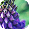 lovefoam's avatar