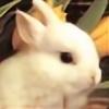LOVEKAT231's avatar