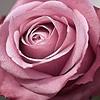 loveofart11's avatar