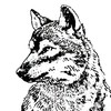Lucifer-Wolf's avatar