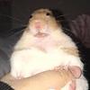 LuciYourLocalArtist's avatar