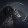 lucyys's avatar