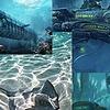 LukiAdopts's avatar