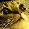 LuLuppier's avatar