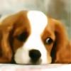 luluu22332's avatar