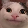 luna3392's avatar