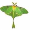 LunaCreationsX's avatar