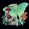 lunarskeleton's avatar