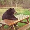 LusytheBonny's avatar