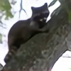 luweezla's avatar