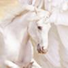 luxsac's avatar