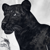 lycanine's avatar