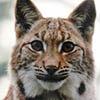 Lynxander's avatar