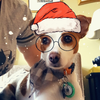 lzamprogne's avatar