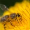 MachPL's avatar