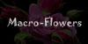 Macro-Flowers