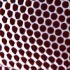 macrophotography's avatar