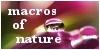 MacrosOfNature's avatar