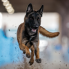 MadDogMcIntyre's avatar