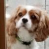 maddy7853's avatar