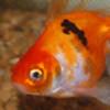 Maetessa's avatar