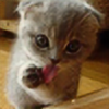 maggieblue1's avatar