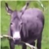 Magik3's avatar