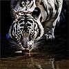 mahmed011's avatar
