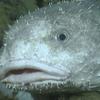 maiden-uvu's avatar