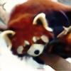 MaidenoftheMist's avatar
