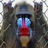 MairsPhotographics's avatar