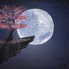 majaspaintings's avatar