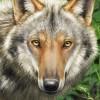 makangeni's avatar