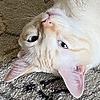Malifer's avatar