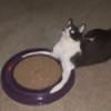 MalleableCat's avatar