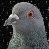 MamaPigeon's avatar