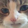 Manalinger's avatar