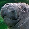 manati20's avatar